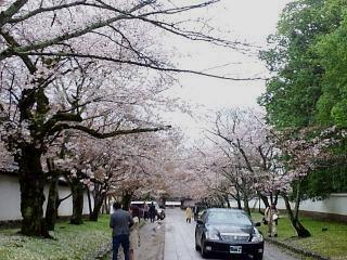 20150405京都御所(その61)