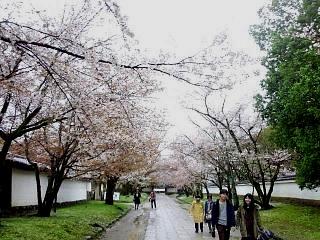 20150405京都御所(その62)