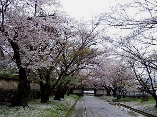 20150405京都御所(その64)