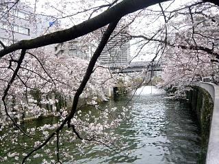 20150329目黒の桜(その19)