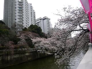 20150329目黒の桜(その20)