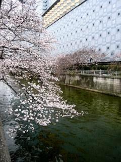 20150329目黒の桜(その23)