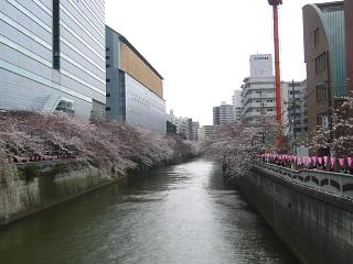 20150329目黒の桜(その26)