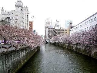 20150329目黒の桜(その27)