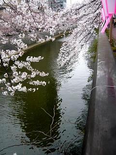 20150329目黒の桜(その34)