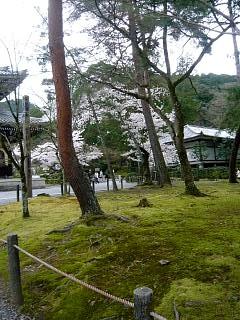 20150403南禅寺(その33)