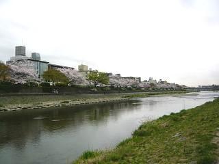 20150403鴨川縁(その23)