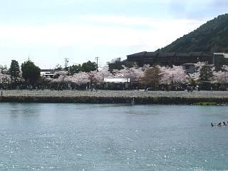 20150404嵐山渡月橋(その11)