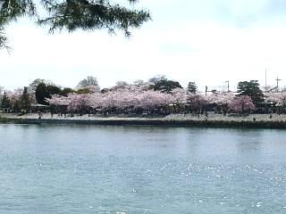 20150404嵐山渡月橋(その12)