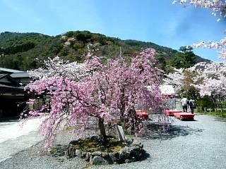 20150404嵐山桜(その50)