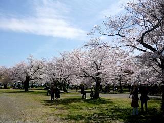 20150404嵐山桜(その53)