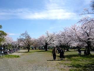 20150404嵐山桜(その54)