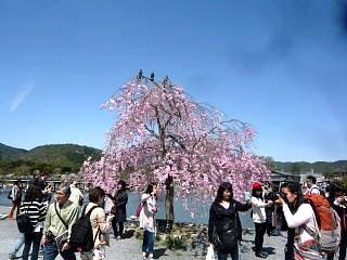 20150404嵐山桜(その55)