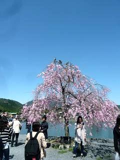 20150404嵐山桜(その56)