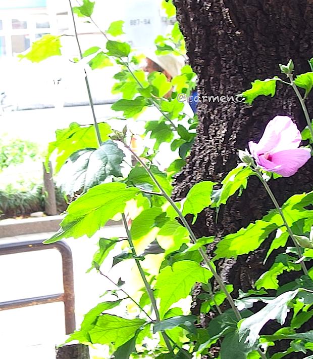 白っぽい画像の葵