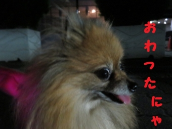 花火 076