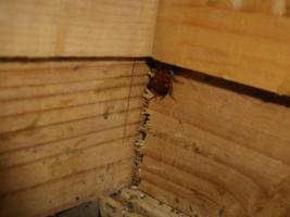 空き店舗のゴキブリ調査