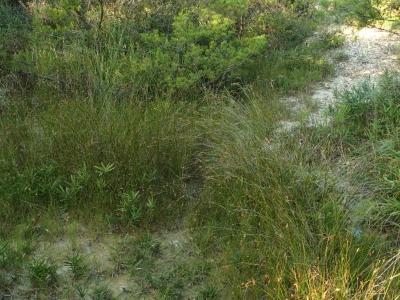 バッドランドの小湿地