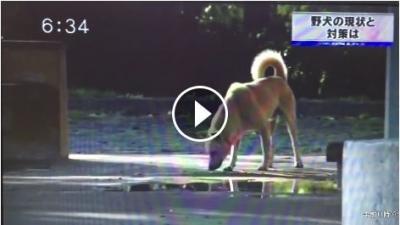 山口県野犬