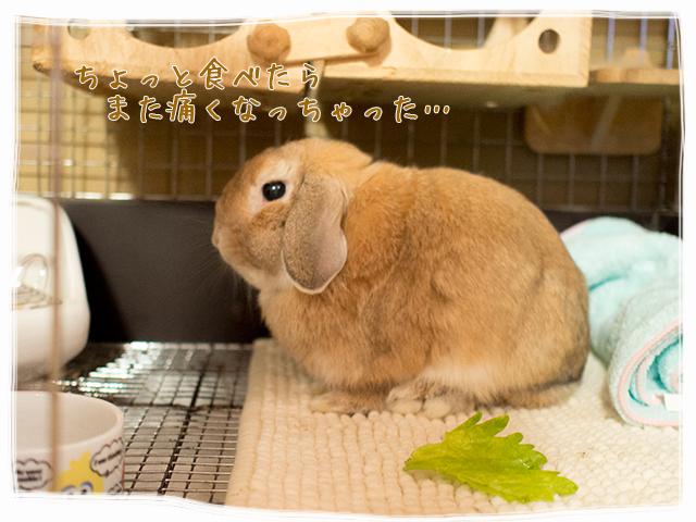 cookieblo1510132.jpg