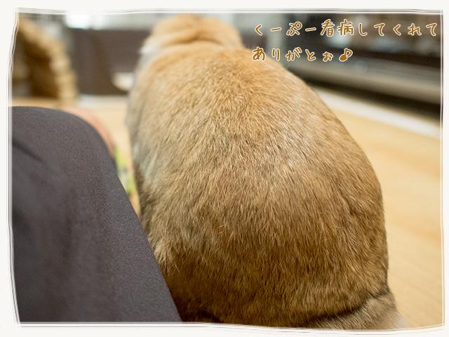 cookieblo1510164.jpg