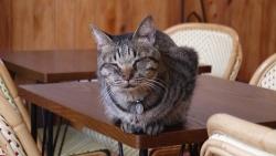 猫カフェ 017