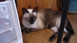 猫カフェ 020