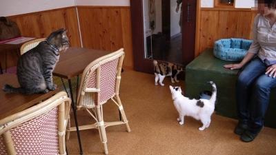 猫カフェ 003