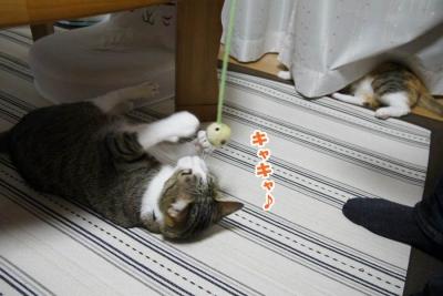 猫カフェ 078