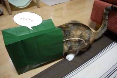 猫カフェ 086