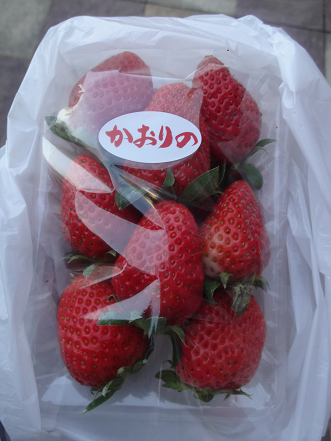 """イチゴ""""かおりの"""""""