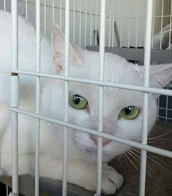 白猫探し 1443003633970