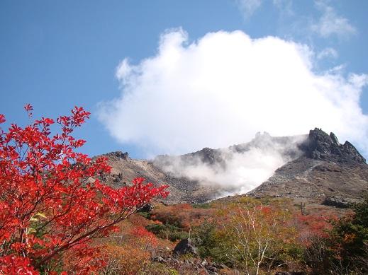 茶臼と紅葉