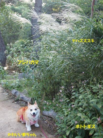 森林公園秋草と