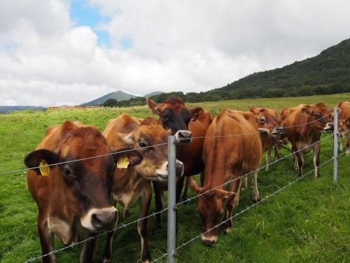 牛さん寄ってきてくれたで