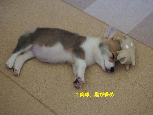 豚さんと寝んね