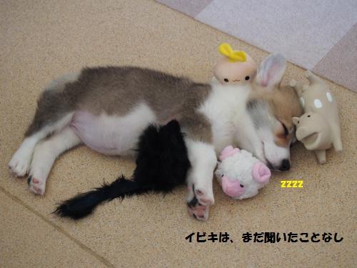 おもちゃと寝んね