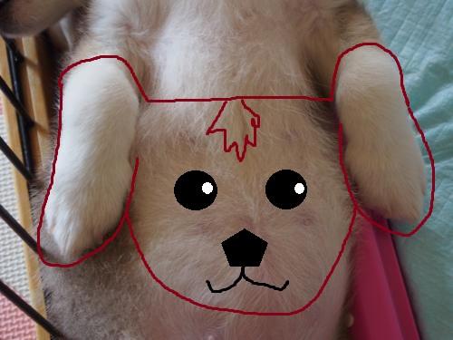たれ耳犬出現