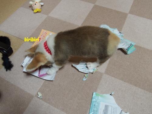 紙をかみかみ