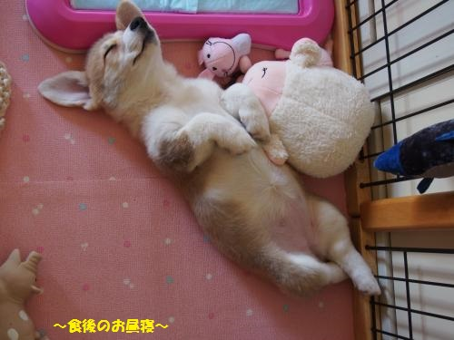 スヤスヤ食後の昼寝
