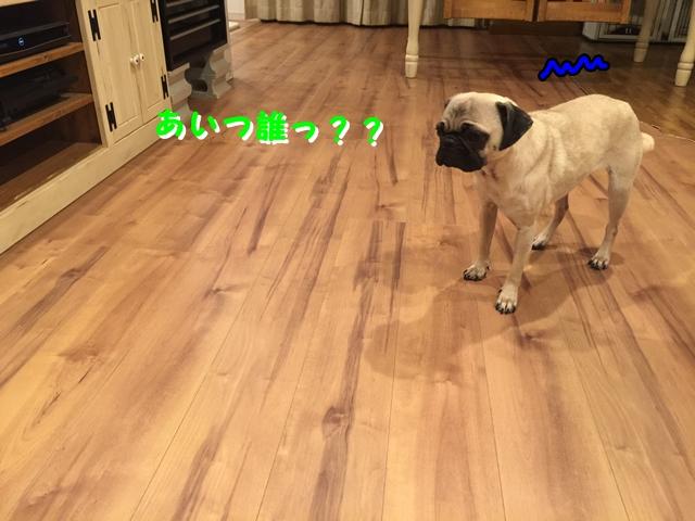 IMG_5813.jpg