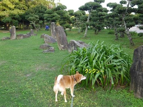 3緑イッパイの公園