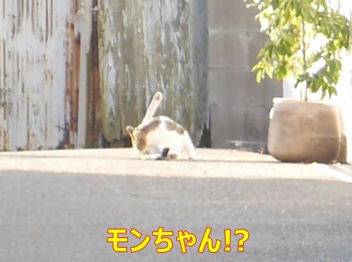 5モンちゃん