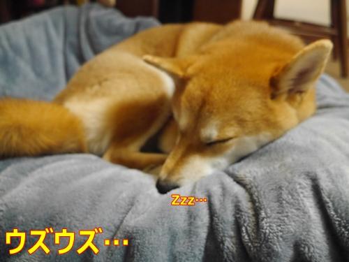 2カワイイ寝顔