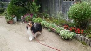 お庭もんど