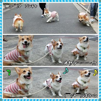 12日お散歩