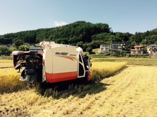稲刈り20151009