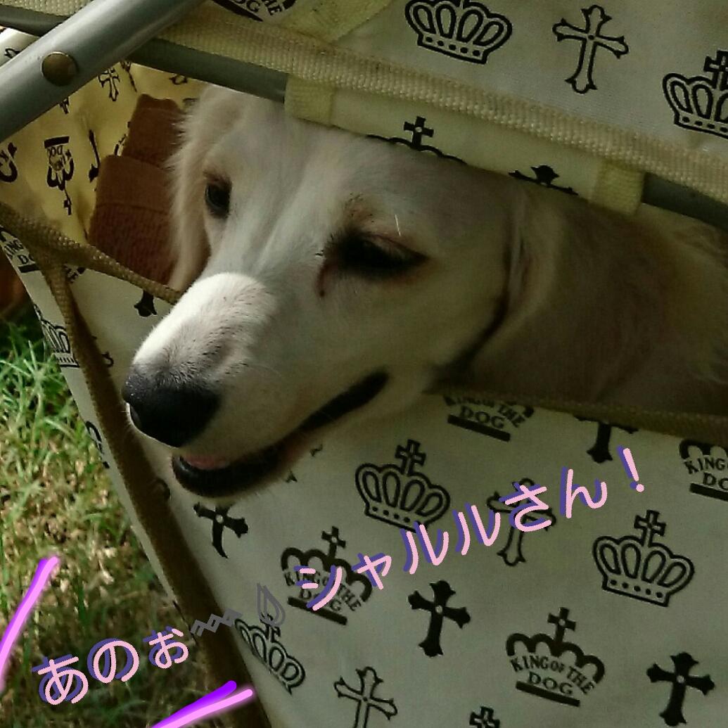 150907_odaiba_04.jpg