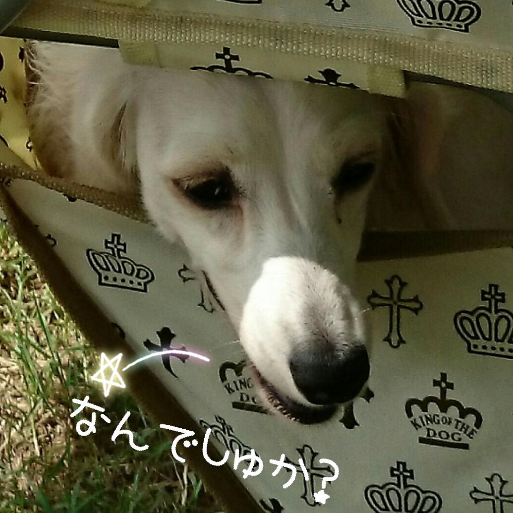 150907_odaiba_5.jpg