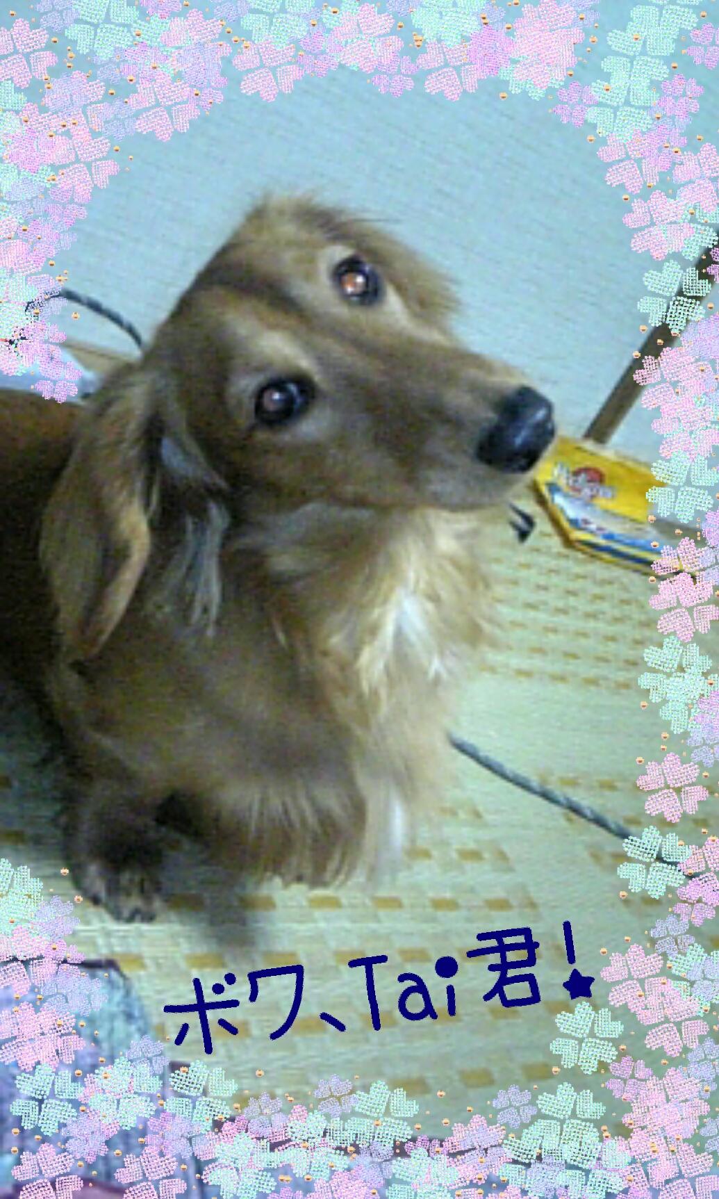 150919_hana_03.jpg